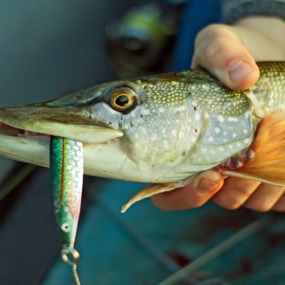 Рыбалка в Литве. Разрешение на рыбную ловлю и основные правила