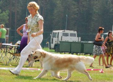 Выставка собак Молетай