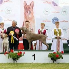 Международные выставки собак в Молетай 2016