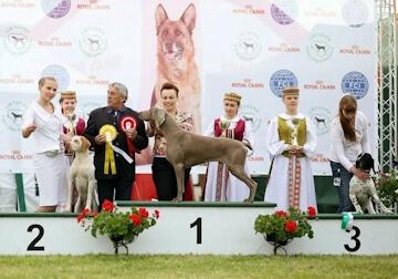 International Dog Shows Moletai 2016