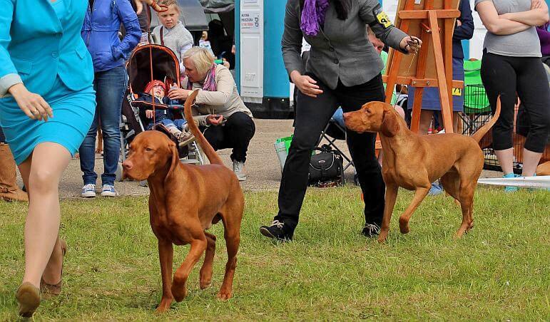 Международные выставки собак в Молетай