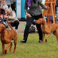 Международные выставки собак в Молетай (2xCACIB)